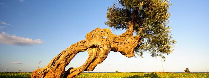 Apuliens faszinierende Landschaften