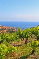 Produkte aus dem Languedoc