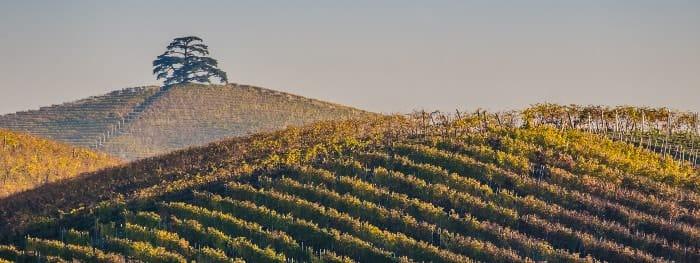 Die Weinbauregion der Langhe